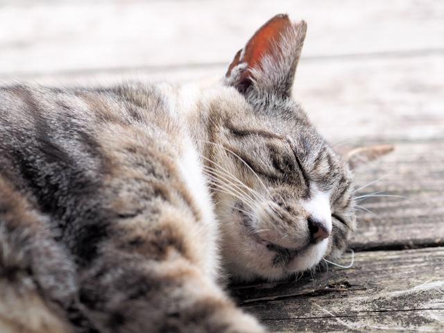 高麗美人の効果【1】夜、ぐっすり眠れました