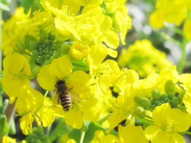 ミツバチの恵み とろりの口コミ<43歳が30日間>飲んだ実感